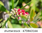 close up of a red flower with... | Shutterstock . vector #670863166