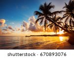 Palmtree Silhouettes On The...