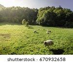 sheep in mala fatra mountain ... | Shutterstock . vector #670932658
