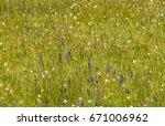 Lush Grassy Wildflower Meadow...