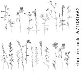 vector set of ink drawing wild... | Shutterstock .eps vector #671081662