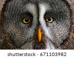 Detail Face Portrait Of Owl...