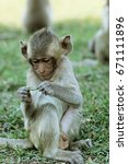 Baby Macaque  Little Cute...
