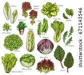 salads and leafy vegetables... | Shutterstock .eps vector #671143546