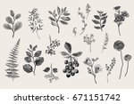 leaves  flowers and berries set.... | Shutterstock .eps vector #671151742
