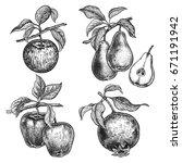 apples  garnet and pears....   Shutterstock .eps vector #671191942