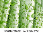 water droplets on leaves   Shutterstock . vector #671232592