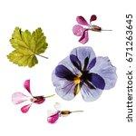 dry flowers | Shutterstock . vector #671263645