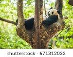 funny cute relaxing panda... | Shutterstock . vector #671312032