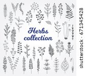 herbs collection isolated on... | Shutterstock .eps vector #671345428