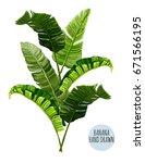 beautiful hand drawn botanical... | Shutterstock .eps vector #671566195