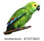 Green Brazilian Parrot Amazon...