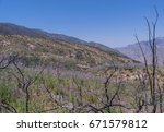 hill side with wild lupine ... | Shutterstock . vector #671579812