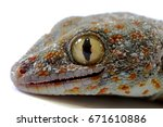 close up of dead gecko on... | Shutterstock . vector #671610886