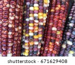 Close Up Of Colorful Indian Corn