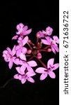 flowers | Shutterstock . vector #671636722