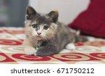 cute kitten sleeping on a red... | Shutterstock . vector #671750212