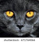 closeup of beautiful luxury... | Shutterstock . vector #671764066