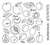 Set Of Vector Fruits  Peach ...