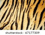 Texture Of Real Tiger Skin  ...