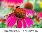 bumble bee pollinating red... | Shutterstock . vector #671809456