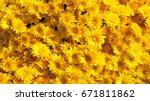 yellow chrysanthemums daisy... | Shutterstock . vector #671811862