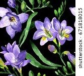 wildflower fresia flower... | Shutterstock . vector #671818015