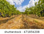 grape wineyard in paarl  south... | Shutterstock . vector #671856208