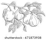 quince fruit graphic branch... | Shutterstock .eps vector #671873938