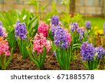 close up of surprise pink and...   Shutterstock . vector #671885578