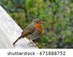 robin red breast on window perch | Shutterstock . vector #671888752