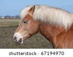 head of a horse | Shutterstock . vector #67194970
