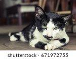 Beautiful Cute Cat. Green Eye...