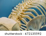 part of the whale skeleton.... | Shutterstock . vector #672135592