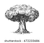 olive tree old engraving.... | Shutterstock .eps vector #672233686