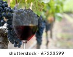 collage of wine glass and grapes on the vine - stock photo