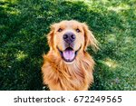 Stock photo that golden smile 672249565