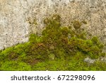 Fresh Lichen   Moss  Growing U...