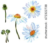 wildflower daisy flower in a... | Shutterstock . vector #672322738