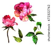 wildflower peony flower in a... | Shutterstock . vector #672322762