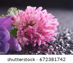 aquilegia and clover on a black ... | Shutterstock . vector #672381742