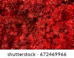 Red Leaf Texture. Leaf Texture...