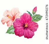 watercolor tropical flower... | Shutterstock . vector #672490276