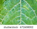 natural green background ... | Shutterstock . vector #672608002