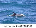 albufeira  algarve region ... | Shutterstock . vector #672704962
