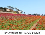 Carlsbad Flower Fields ...
