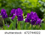 bouquet of flowers irises on... | Shutterstock . vector #672744022