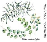 watercolor set with eucalyptus... | Shutterstock . vector #672777406