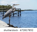 Regal Birds Of Florida  The...