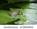 frog in pond | Shutterstock . vector #672860962